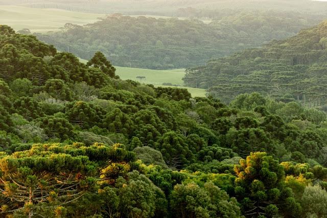 Lush-green-mountain-landscape-Brazil