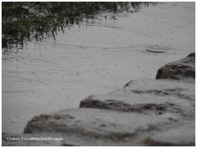 Un charco bajo la lluvia - Chacra Educativa Santa Lucía