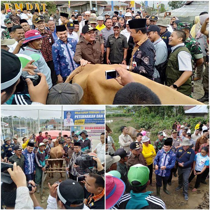 Bupati Kerinci Dampingi Gubernur Jambi Iseminasi Buatan Hewan Ternak
