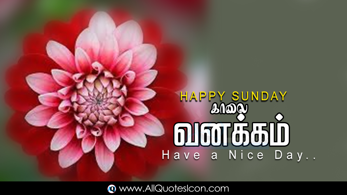 Best Happy Sunday Tamil Good Morning Quotes Images Hd Wallpapers Best Life Inspiration Quotes In Tamil Whatsapp Pictures Online Good Morning Tamil Kavithaigal Free Download Www Allquotesicon Com Telugu Quotes Tamil