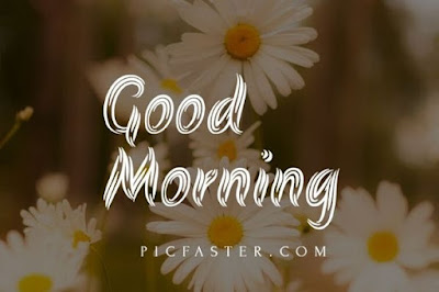 60+ Good Morning Images For Whatsapp Download [2020]
