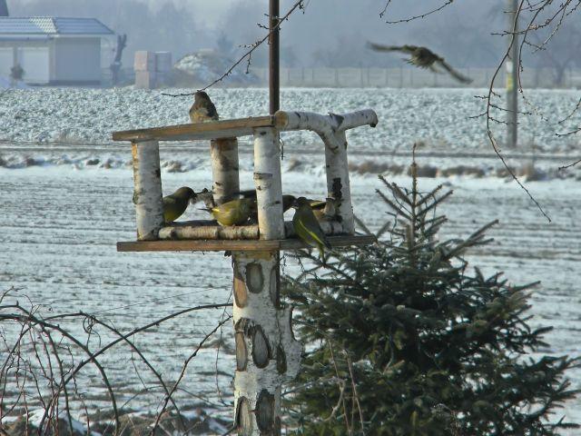 karma dla ptaków, karmnik, zima, śnieg, ptaki