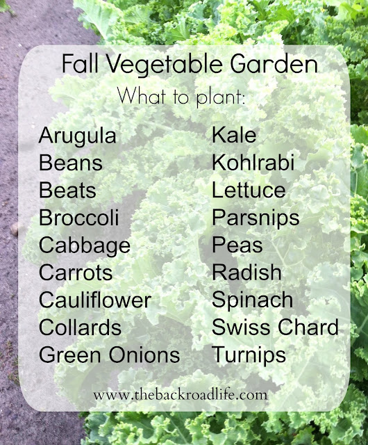 5 Fall Harvest Vegetables To Plant Now: The Backroad Life: Fall Vegetable Garden...when To And