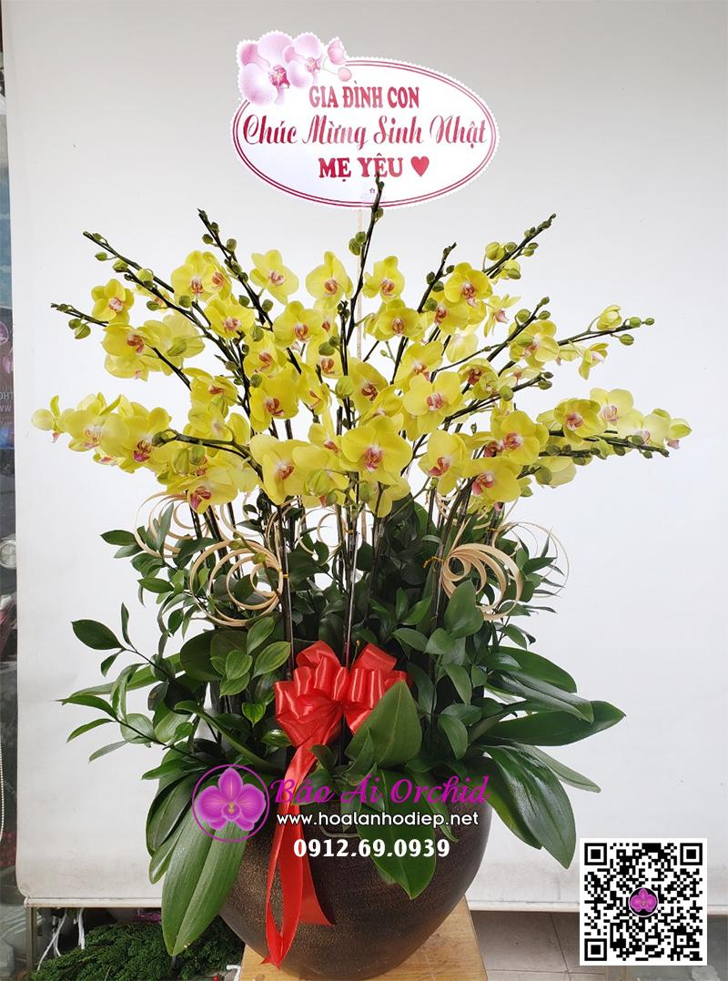 chậu hoa lan vàng tặng tết 2021