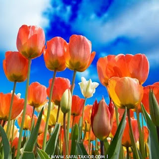 [400 Most beautiful ] flower images for whatsapp dp   cute flower dp for whatsapp   rose flower images dp