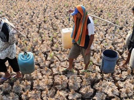 Tiga Desa di Cirebon Diprediksi Tak Bertemu Hujan Lebih Dari 80 Hari