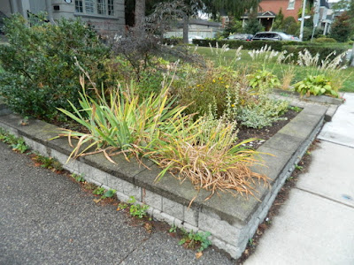 Fall Cleanup Toronto Bedford Park Front Garden before by Paul Jung Gardening Services