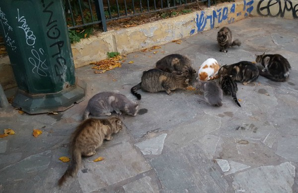 athens stray cats