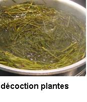 Comment on fait la décoction de plantes