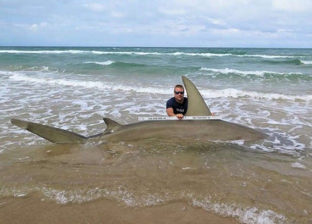 World sharks news us caught an huge 13 feet hammerhead for Shark fishing texas