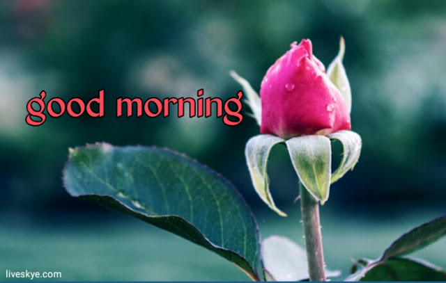20+Beautiful Good Morning Images with Flowers
