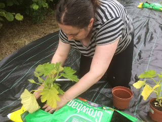 Planting winter squash