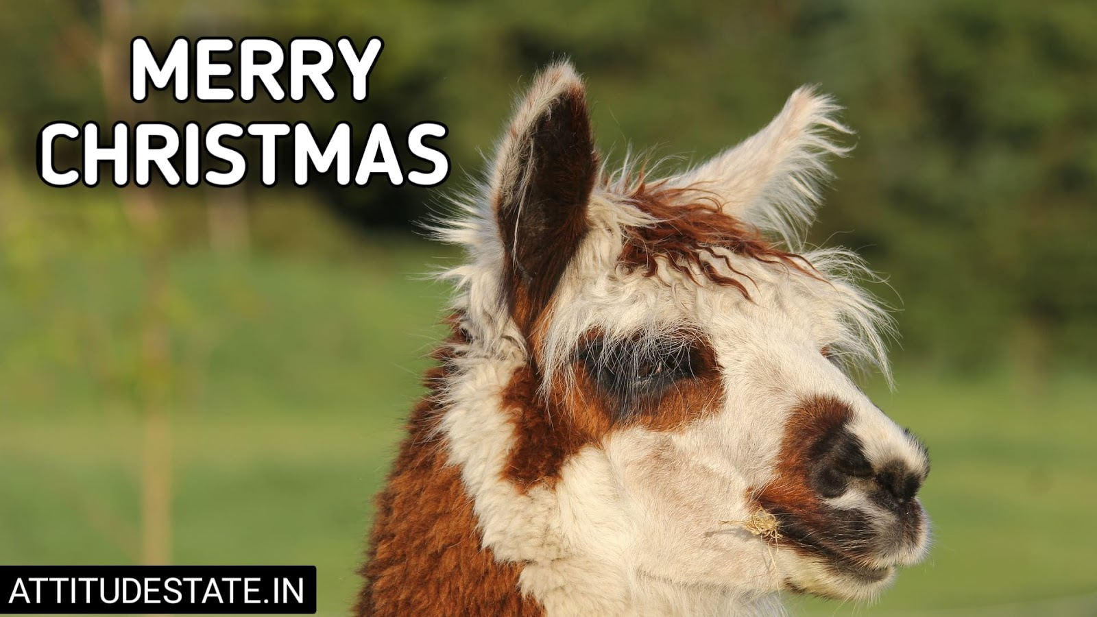 funny merry christmas quotes for friends