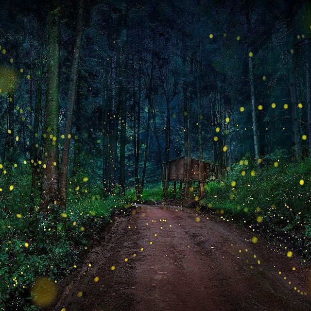 Dance of light at the Mexican firefly sanctuary