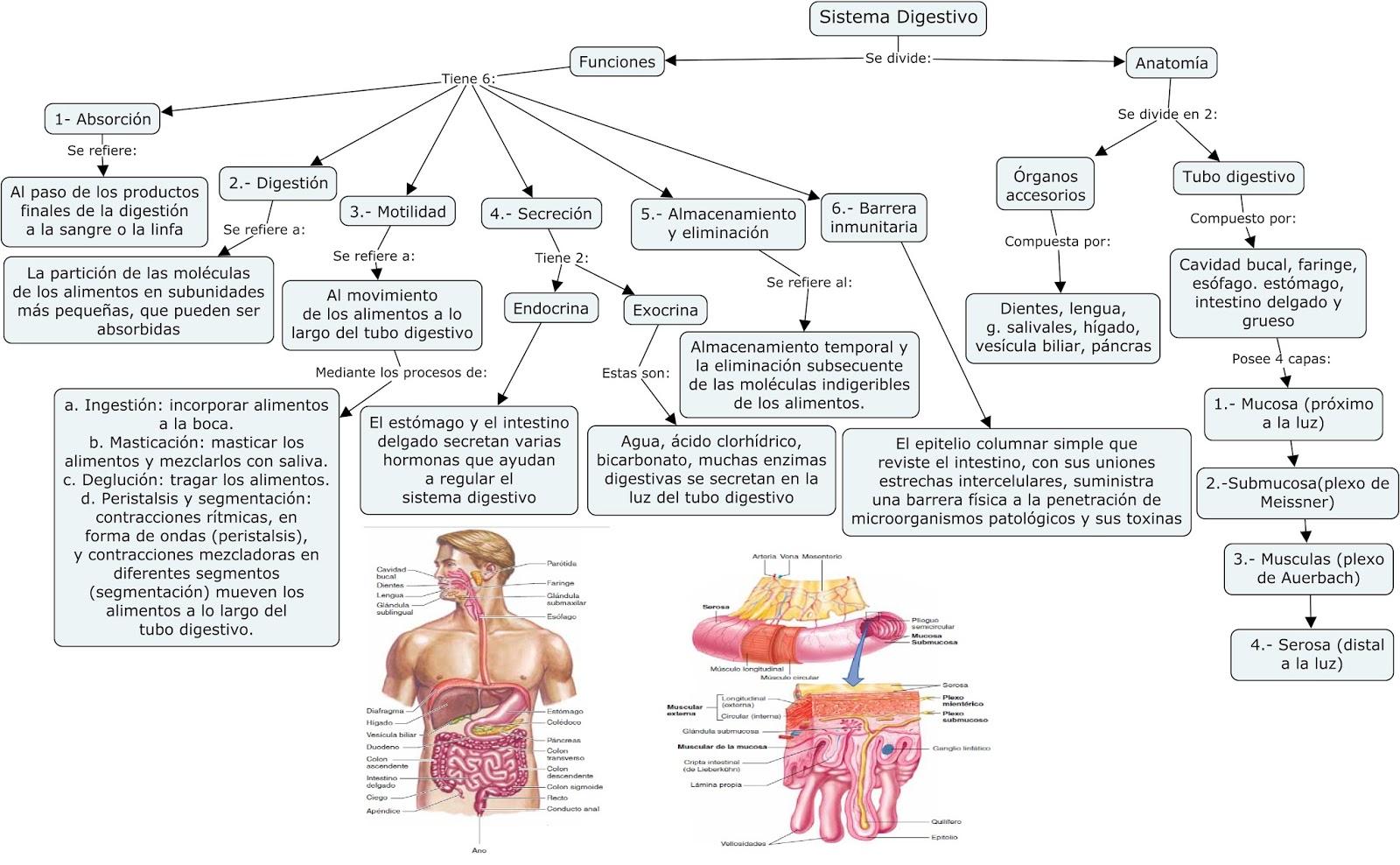 Fisiología Básica y Médica: Mapa Conceptual de \