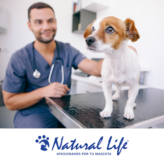 donde estudiar veterinaria en capital federal gratis