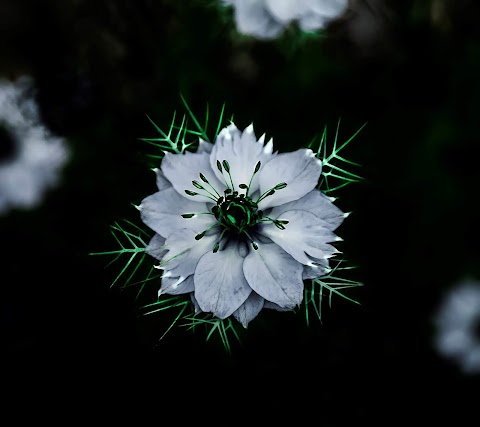 Cánh Hoa Trắng Lung Linh