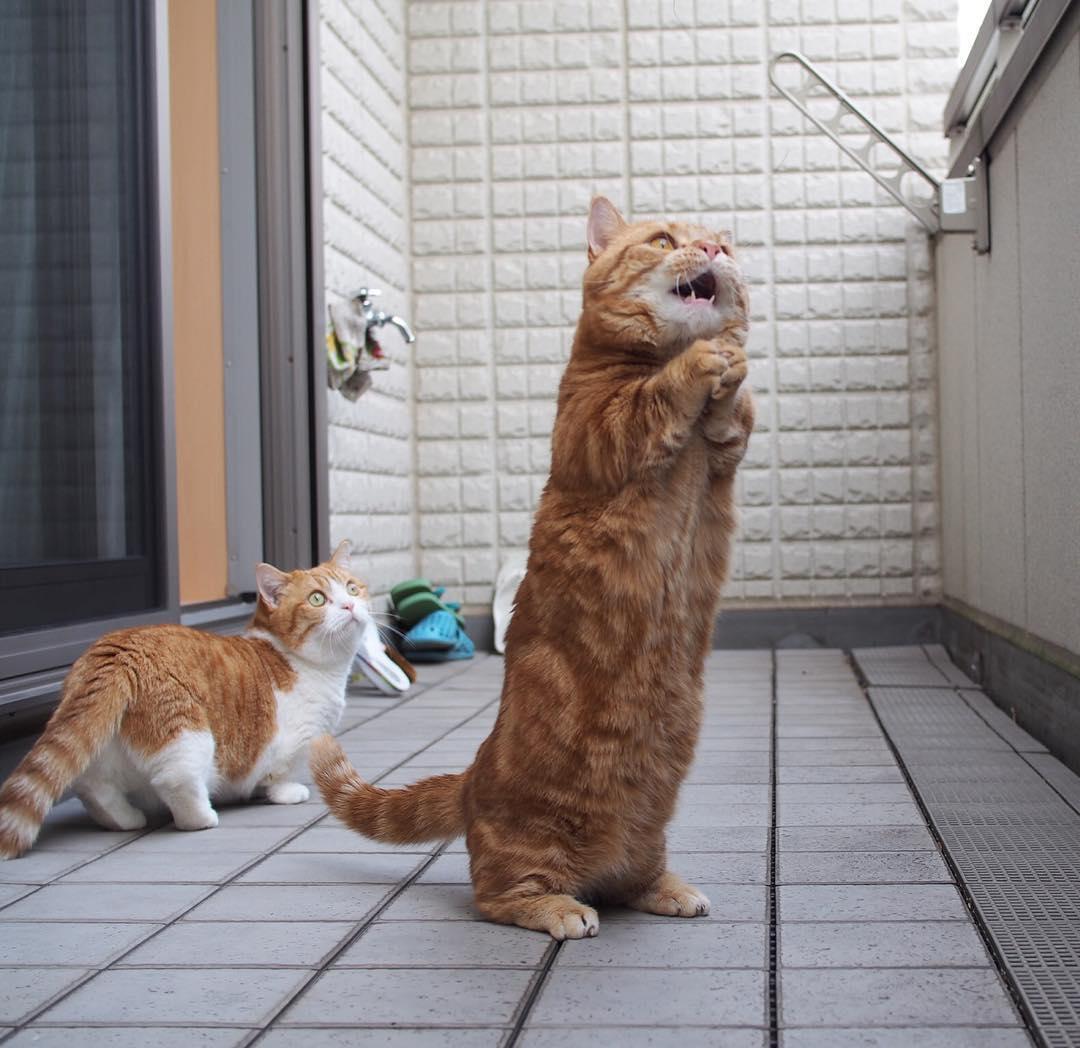 Funny cats - part 217, best cats, cute cat photos, adorable cat photo