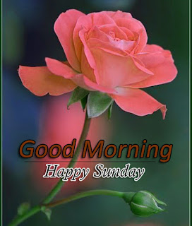 New Good Morning 4k Full HD Images Download For Daily%2B83