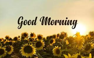 Special Good Morning Shayri, Quotes, Status Hindi || Best Gf, BF Quotes And Shayari Hindi
