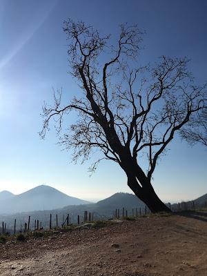 Monte Fasolo