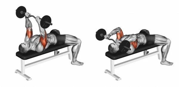 عضلة الترايسيبس تمرين