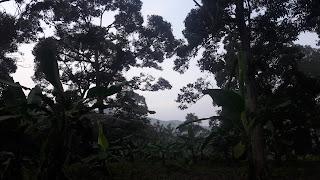 Sepagi Di Dusun Durian Abah