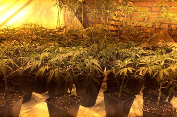 Police bust illegal immigrant growing cannabis after Slaithwaite residents complain about the smell