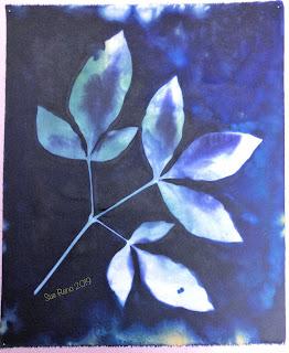 Wet cyanotype -Sue Reno_Image 658