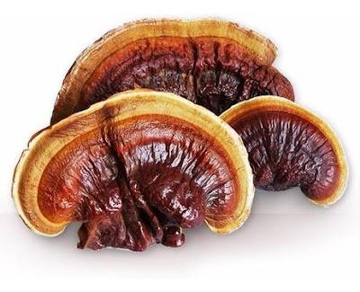 Ganoderma mushroom training