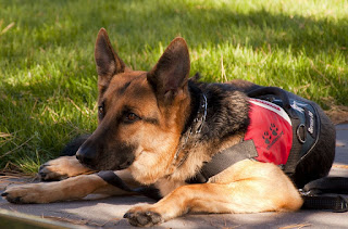 Image: German Shepherd Service Dog, by Skeeze on Pixabay
