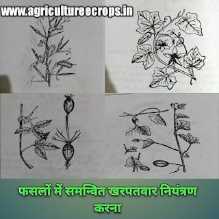 मुख्य फसलों में समन्वित खरपतवार नियंत्रण, फसलों में समन्वित खरपतवार नियंत्रण कैसे करते हैं, Integrated weed management in major crops in Hindi