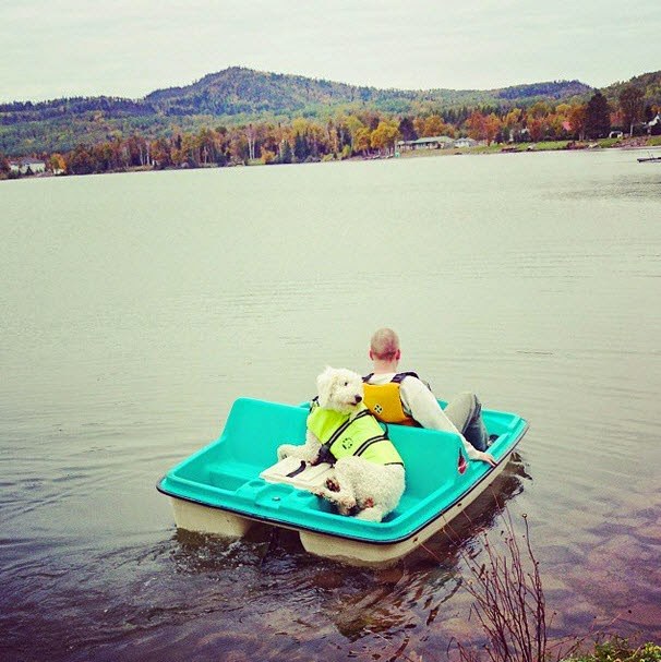 Large Dog in a Life Jacket on a Paddleboat
