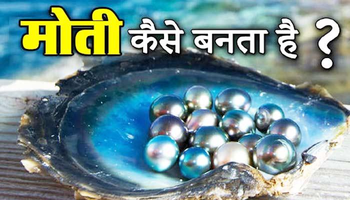 मोती कैसे बनता है? How Oysters Make Pearls
