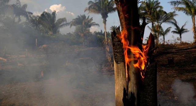 A Floresta Amazônica, também conhecida como o pulmão do mundo, está há dias sendo devorada por incêndios, o que está comovendo internautas pelas proporções das chamas.
