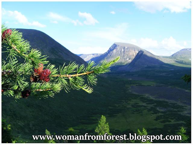 http://womanfromforest.blogspot.com/2016/09/daleka-syberia-cz-iii-co-rosnie-na.html