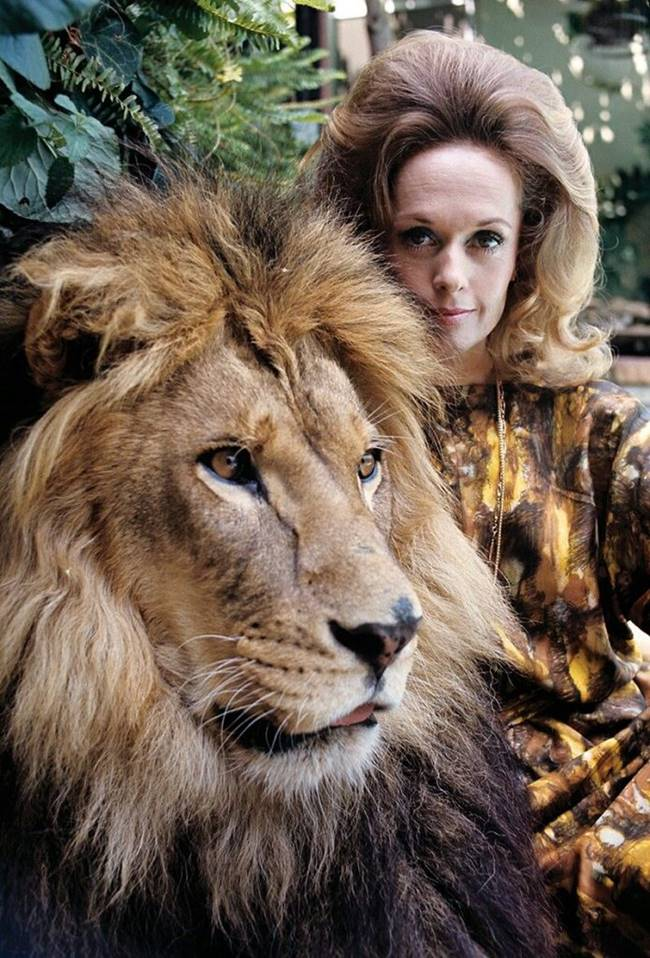Actress Tippi Hedren and her lion