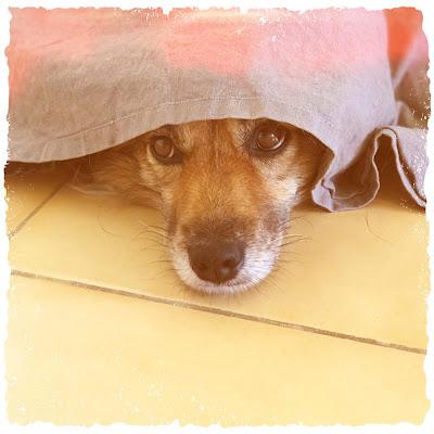 perros Dama