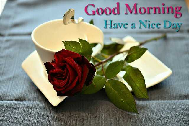 Awesome Good Morrning image with coffee cup and Red rose flower have a nice day