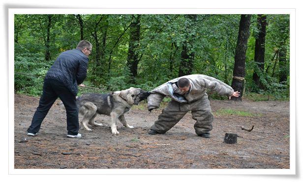 dog aggression training near me