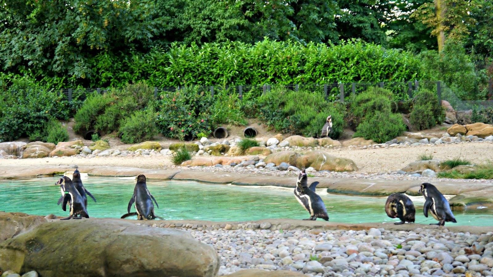 London Zoo Lates Penguins