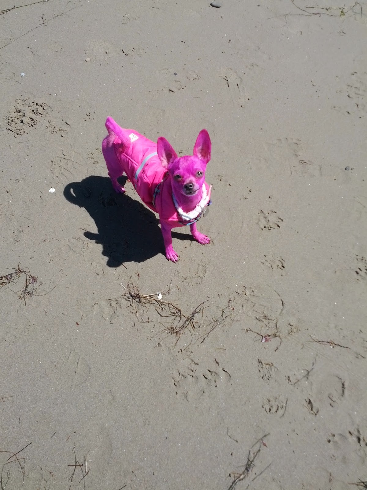 The Dog Geek: So I Dyed My Dog Pink