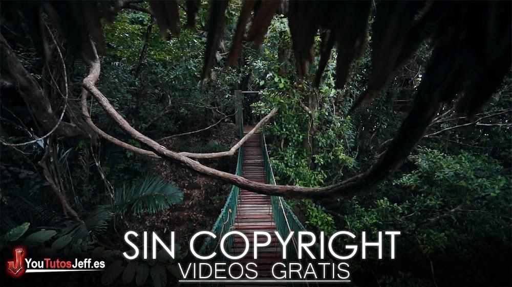 Descargar Vídeos Sin Copyright para Tus Proyectos