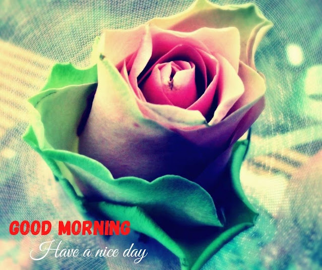 flowers image with good morning