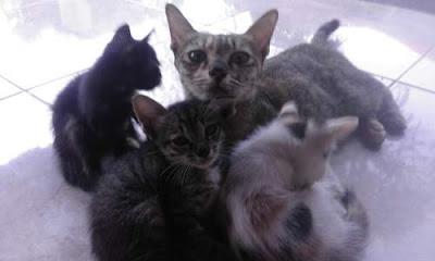 10 Cara Agar Kucing Berumur Panjang Selalu Sehat, Kuat dan Lincah