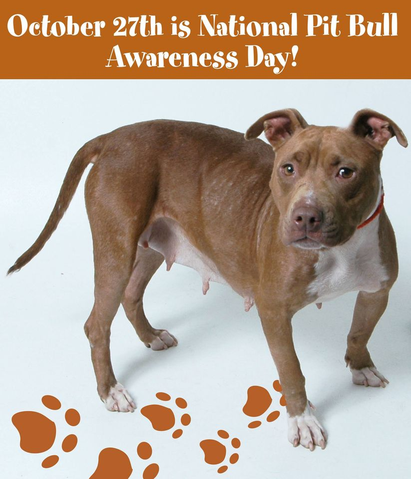 National Pit Bull Awareness Day Wishes Lovely Pics
