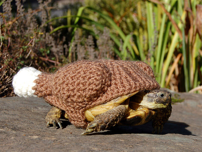 Adorable Pictures Of Tortoises Dressed In Cute Warm Clothes