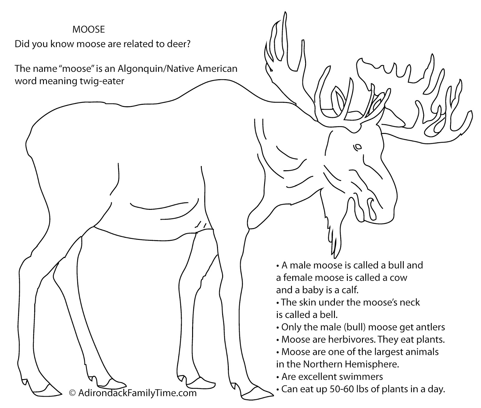 Free Activity Print Out This Moose Coloring Sheet And Fun