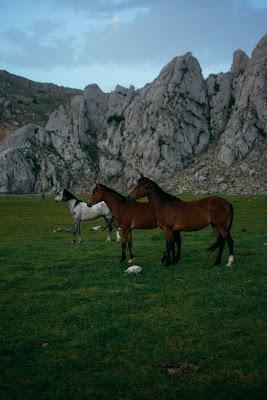 خلفيات طبيعية روعة للخيول والجبال والخضرة