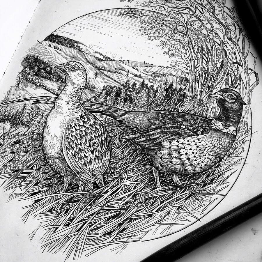 09-Pheasants-Philip-Harris-www-designstack-co